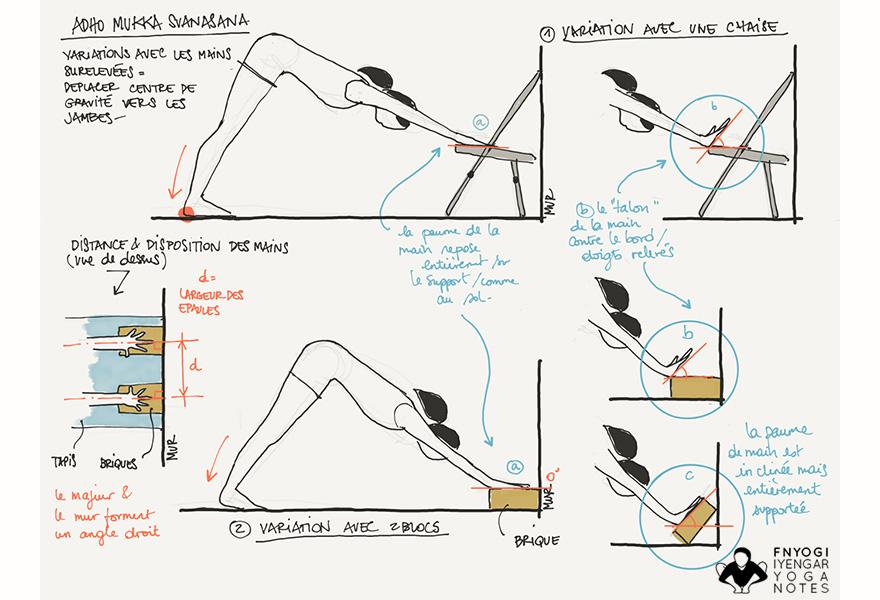 Adho mukha svanasana for Chaise yoga iyengar